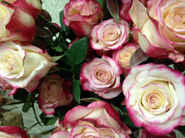Sweetness - Bel Air Florist's Rose of the Month